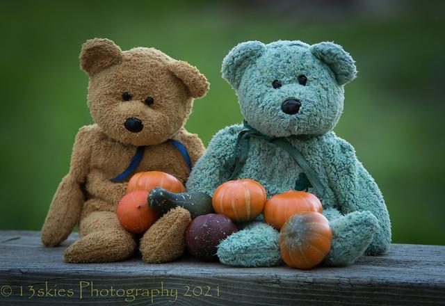 Pumpkin Collectors (HTBT)