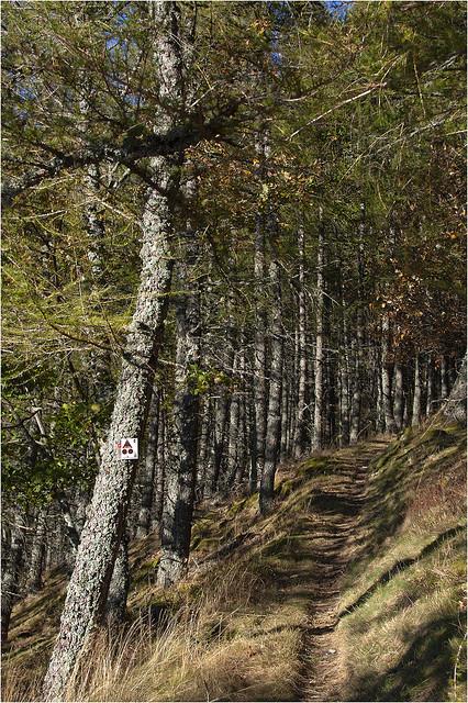 Le sentier dans les mélèzes