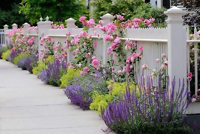 Hidcote Manor House Garden Path