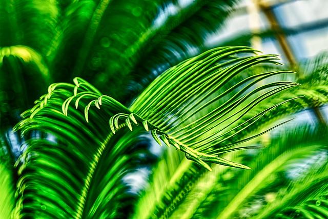 Nature's Elegance