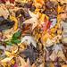 Fallen Leaves after the Rainstorm (I), 10.25.21