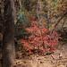 fall_color_bradshaws_1_20211025_117
