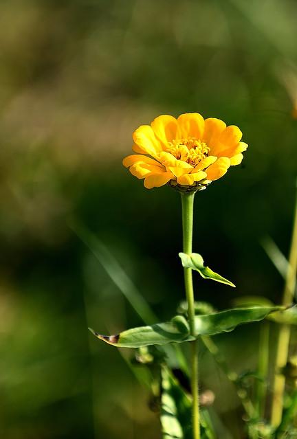 fleur !