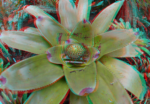 Plant Victoria-serre Blijdorp Zoo Rotterdam 3D D7000 Fish-eye