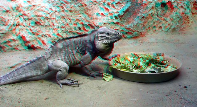 Reptile (Leguaan)  Blijdorp Zoo 3D anaglyph