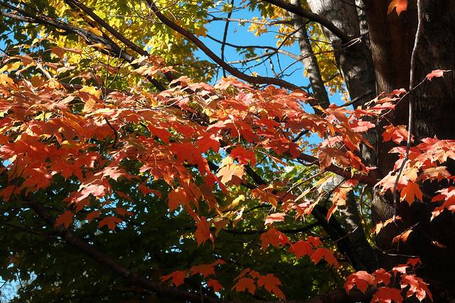 Sunny Autumn Day - Study A Tree