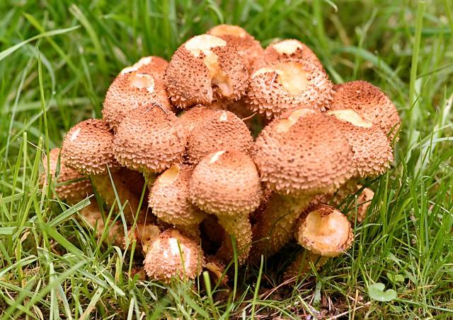 Fungi 2021 A - 80