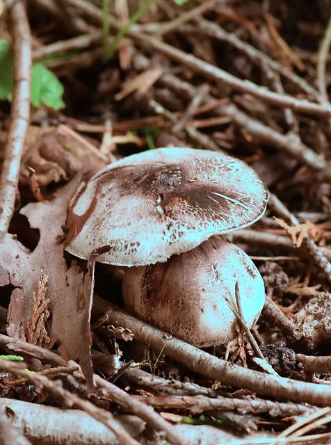 Fungi 2021 A - 71
