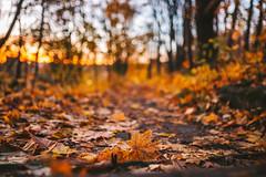 Leaves | Kaunas