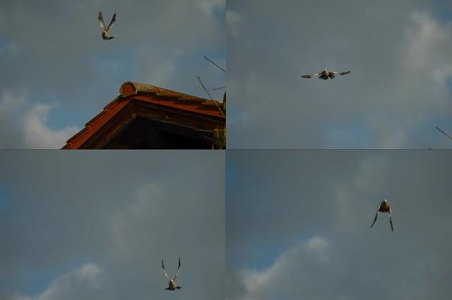 DSC_0037.JPG Flying