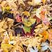 Fallen Leaves after the Rainstorm (IzI), 10.25.21