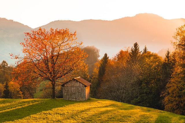 Sunset at the Autumn Tree