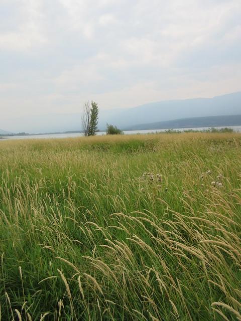 Marshy, marshy, marshy