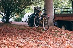Deep oak leaves. 15 Oct 2021