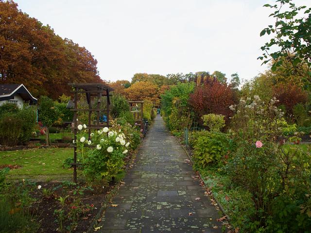 Der Garten am 26. Oktober 2021