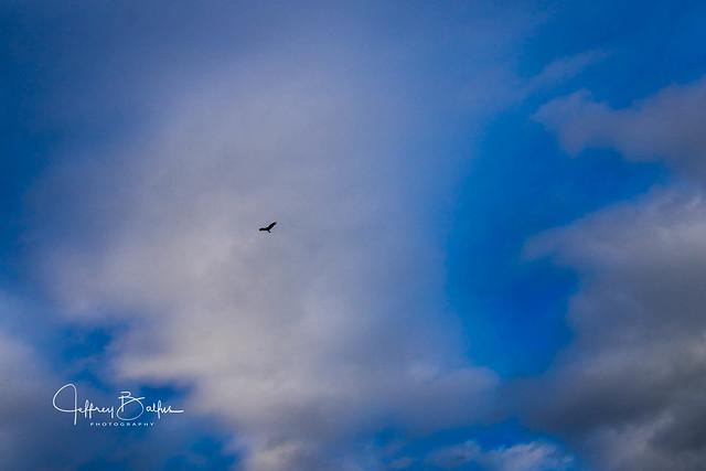 Clouds with bird-2.jpg