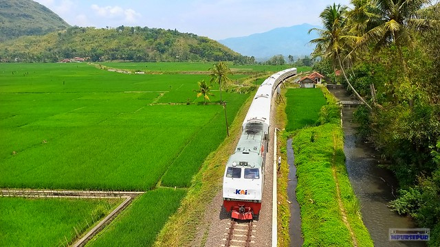 Serayu train through the rice fields in the Karangsari area