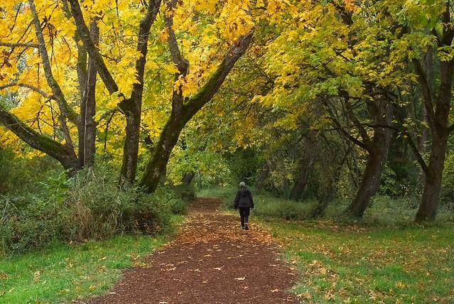 Pre's trail at Autumn