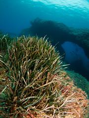 Neptune grass prairie (Posidonia oceanica) in the Mediterranean Sea