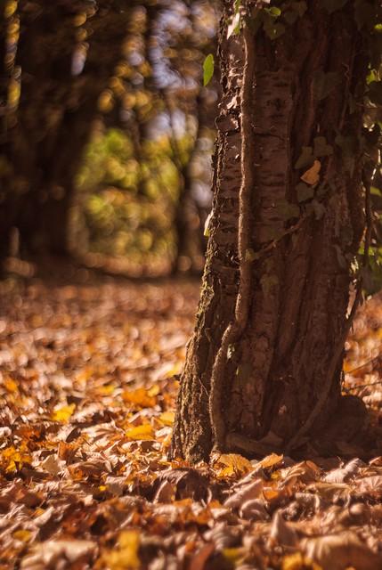 Last year's autumn...