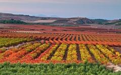 Colores en las viñas