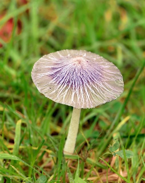 Fungi 2021 A - 73