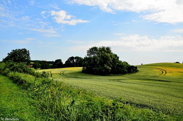 Landschaft bei Warnkenhagen / Mecklenburg-Vorpommern