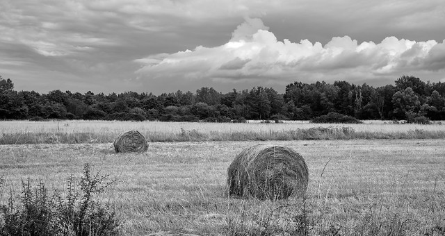 Straw bales in the field