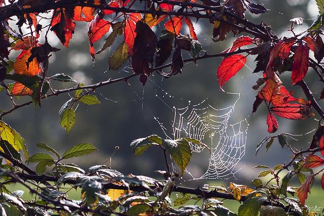 Toile d'automne...