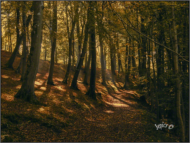 Sunlight Through The Trees..