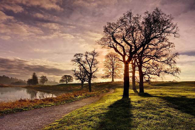 Winter Morning Trees - County Kildare,  Ireland