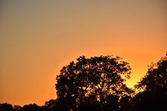 Posta de sol, Pradell de Sió, corbs.