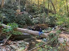 #CatawbaFalls spam part 2 ud83dude0a #Asheville #NorthCarolina #Hiking #XeroPrios #XeroShoes