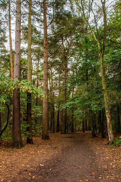 Path trough woods at Alderley Edge