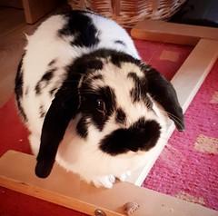 #mybunny #rabbit #love #cuteanimals