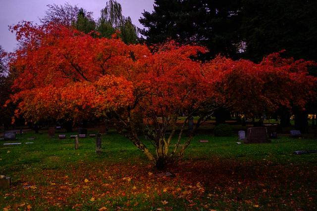 Lone Fir At Night In Autumn