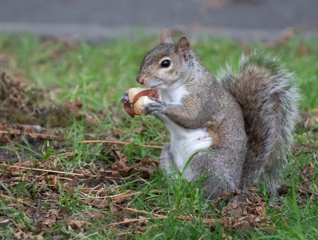 Hot Dog eater.