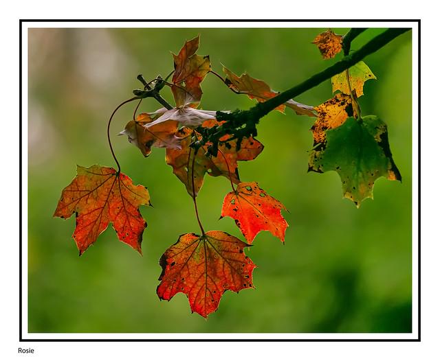 Autumn Progression