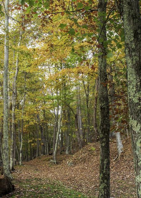 Fall Foliage-HDR