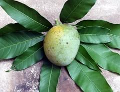 Mango #415: ALPHONSO