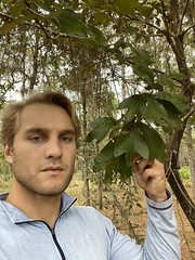 Quercus falcata selfie