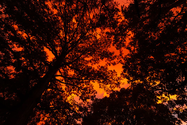 Fire Above the Trees