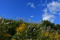 The autumn sceanary1