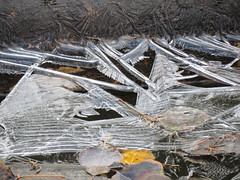 04 Ice patterns in the park
