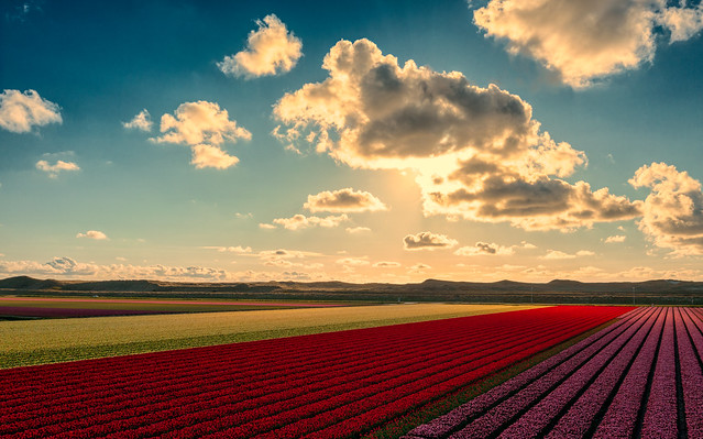 Family of clouds visiting the Dutch flower fields.