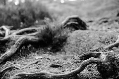 Roots VMZ_6081 - Classic Contrast BW - JPEG - Full size, highest quality - focal length 50 mm