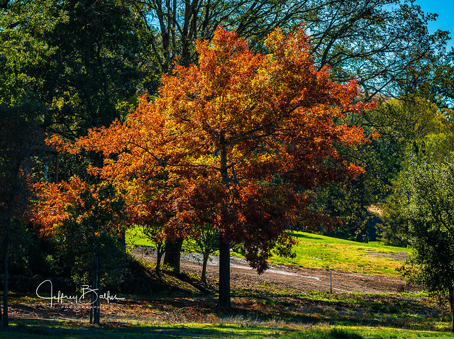 Autumn Colors-744090.jpg