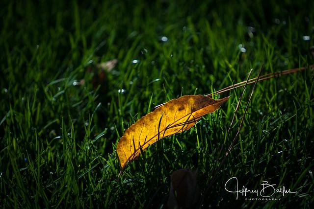 Backlit leaf-743958.jpg