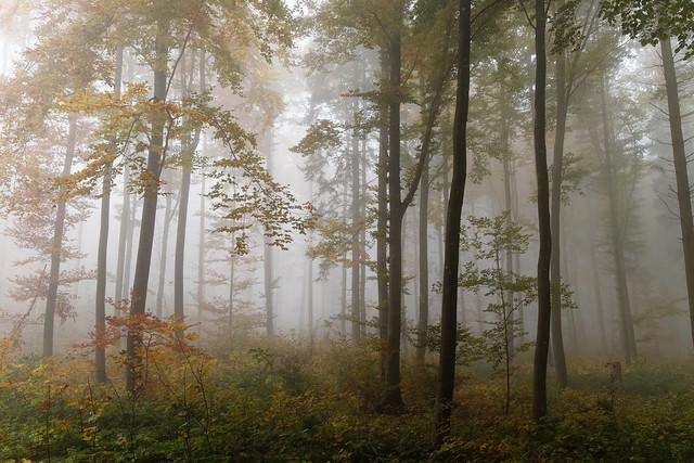 Autumn forest 2021