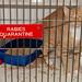 rabies_quarantine-20211027-101